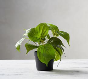 Faux Potted Pothos Houseplant