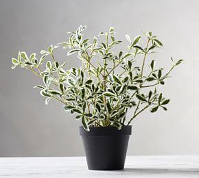 Faux Potted Variegated Mirror Houseplant
