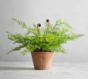 Faux Potted Fiddle Head Fern Houseplant