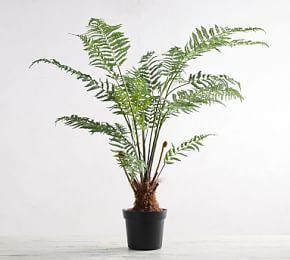 Faux Potted Australian Tree Fern