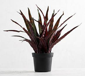 Faux Potted Rattlesnake Houseplant