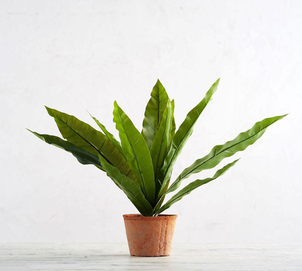 Faux Potted Bird's Nest Fern