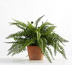 Faux Potted Boston Fern