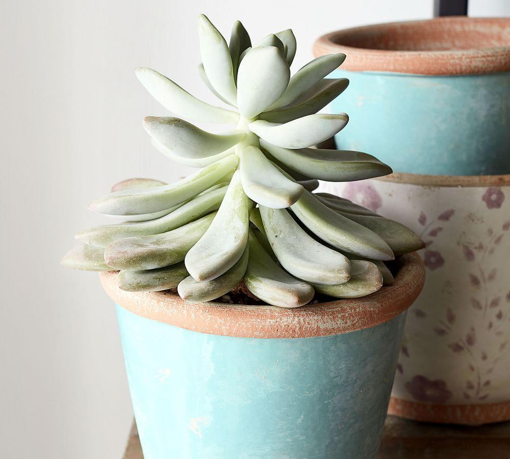 Ceramic Cachepot Collection - Solid