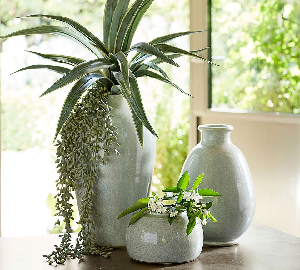 Faux Donkey Tail Succulent Pottery Barn Canada