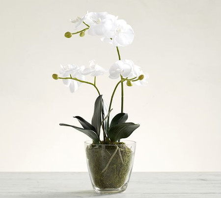 Faux Orchid in Glass Pot