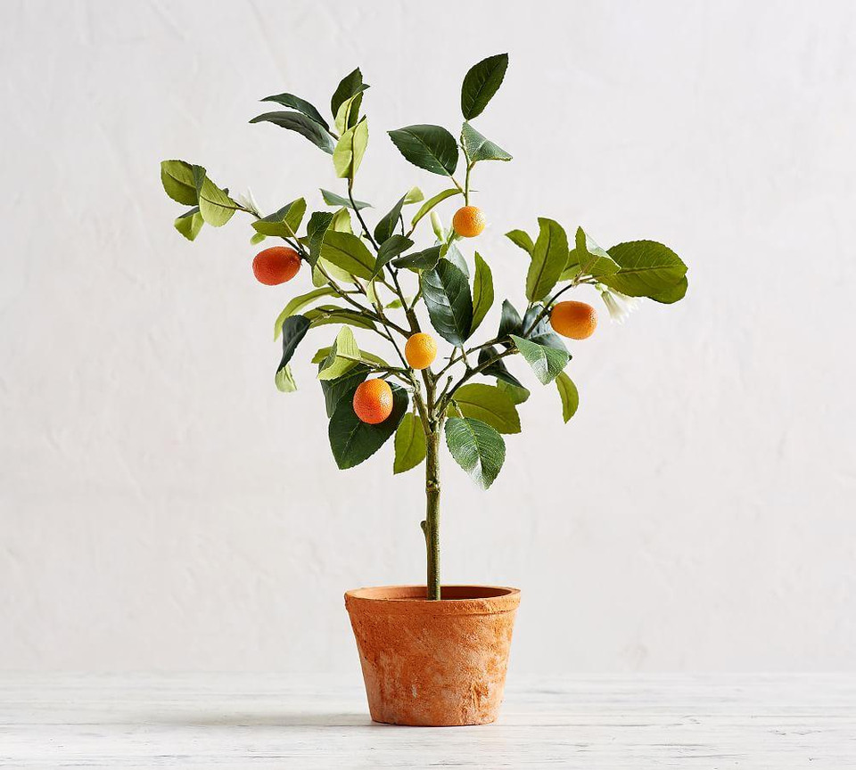 Faux Potted Citrus Trees Pottery Barn Canada