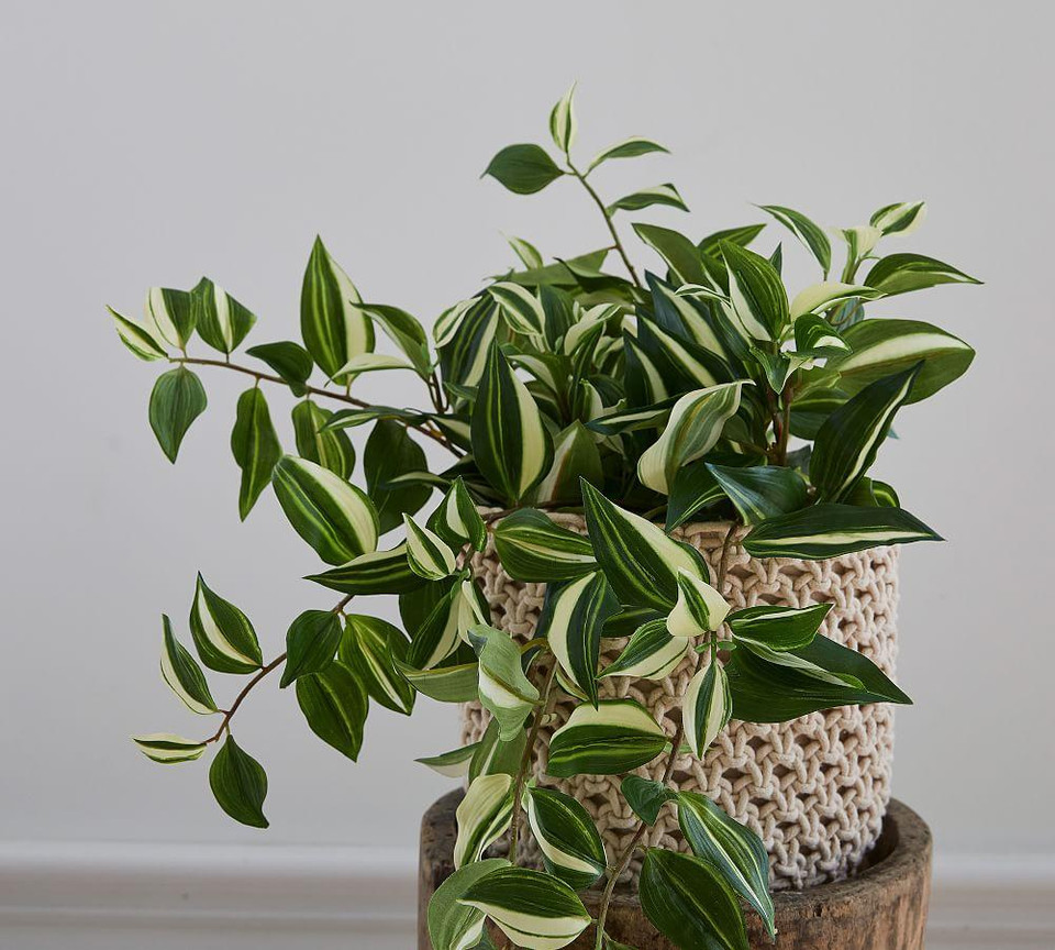 Faux Wandering Variegated Tradescantia Houseplant