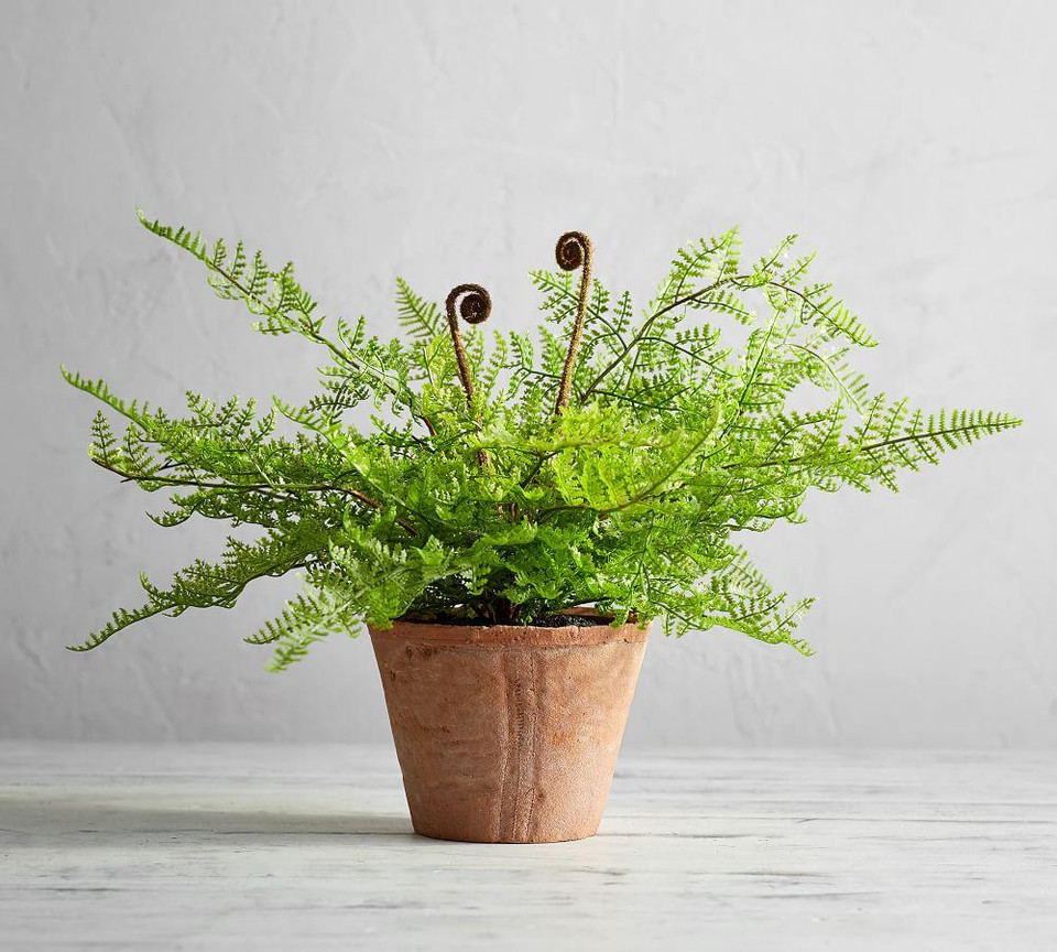 Faux Potted Fiddle Head Fern Houseplant Pottery Barn Canada