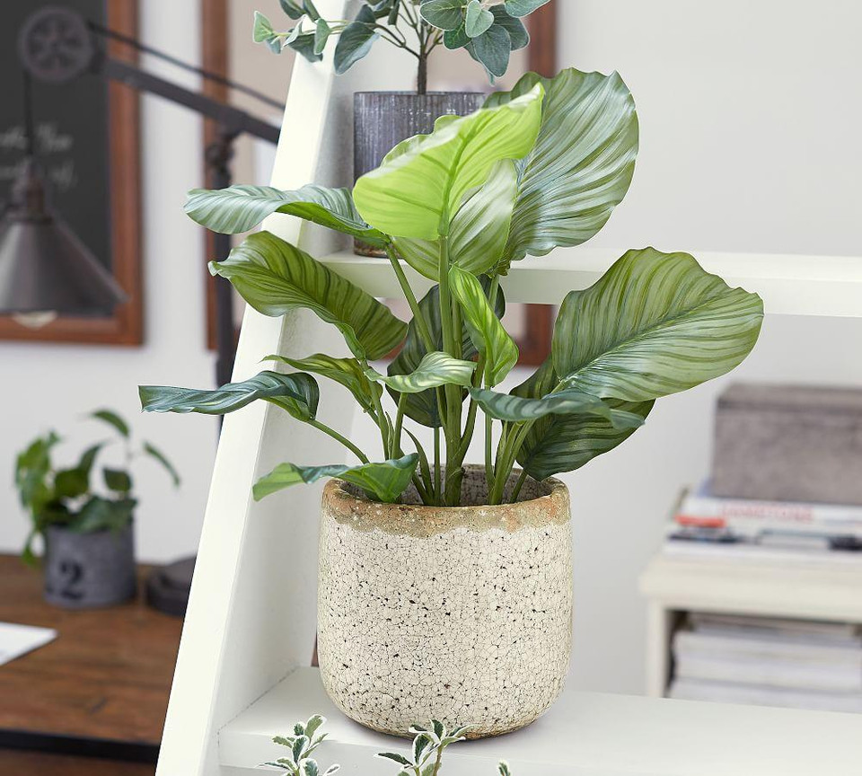 Faux Potted Greater Burdock Houseplant